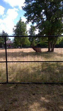 Watertown, estado de Nueva York: Elk exhibit