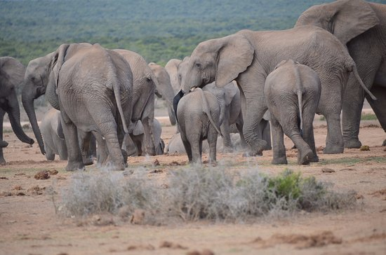 Addo Elephant National Park, แอฟริกาใต้: At Hapoor dam at about midday