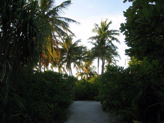 Kuramathi: Spazierweg auf der Insel
