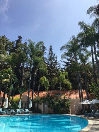 Hotel Bel-Air: Mit etlichen alten Palmen gesäumte Pool-Anlage