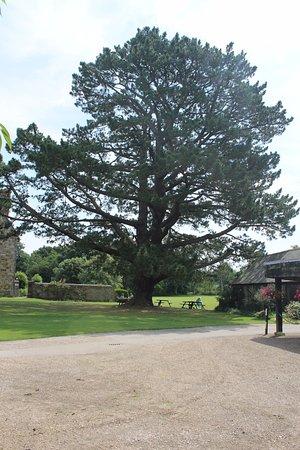 Arlington, UK: Tree in grounds