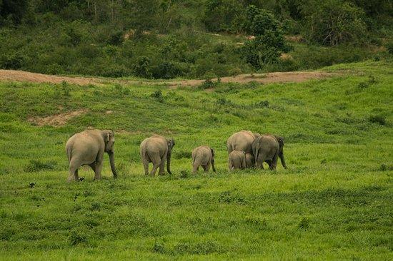 Prachuap Khiri Khan Province, Tayland: Elefantenfamilie