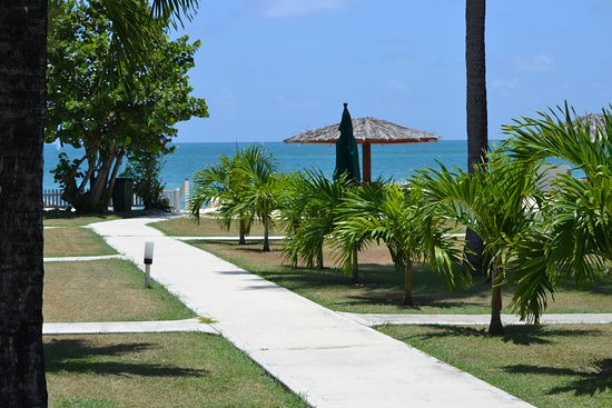Antigua Village: New palm trees planted