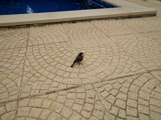 Espiche, Portugal: One of the cute little birds that befriended us, we nicknamed him 'Jumper' because he always jum