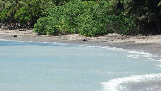 Montezuma, Costa Rica: Playa