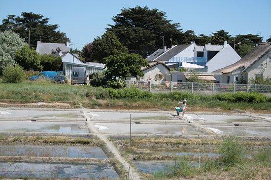 Batz-sur-Mer, France:  La Paludière: Cueillette de la fleur de sel à l'aide d'une lousse