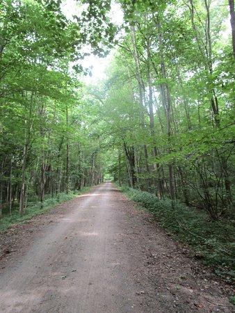 Ohiopyle, Pensilvanya: Part of the trail.
