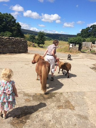 Leyburn, UK: The farm tours are brilliant value for money! £3pp and ours was over an hour and a half, includi
