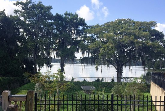 Winter Park, فلوريدا: Rollins College, Lake & Hanging Moss Trees- Calming Scenery
