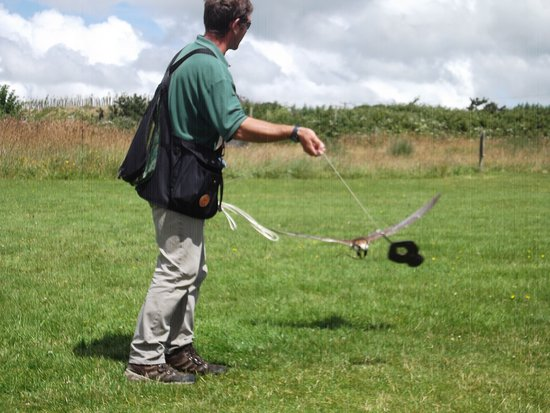 St Columb Major, UK: Using a lure in the display
