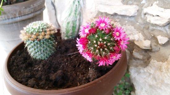 kaktus online