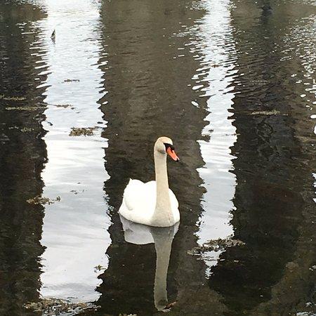 Berwick Upon Tweed Castle & Ramparts: Local wildlife
