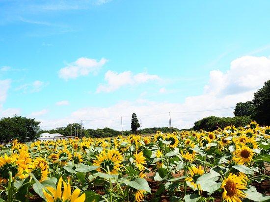 Narita Yume Farm