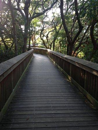 Hampton Inn & Suites Jekyll Island: Boardwalk thru the trees to the beach!