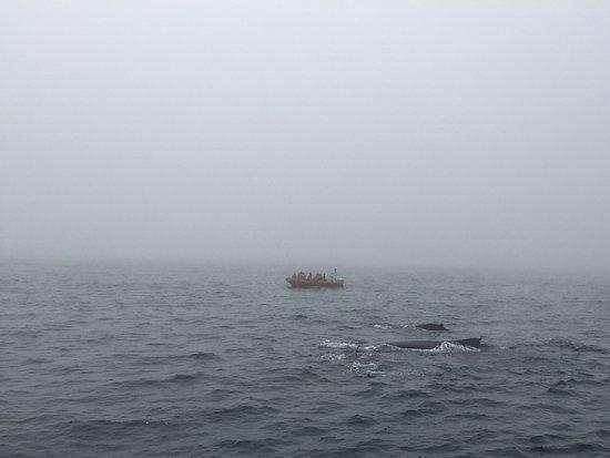 Brier Island, Canada: Whales!!