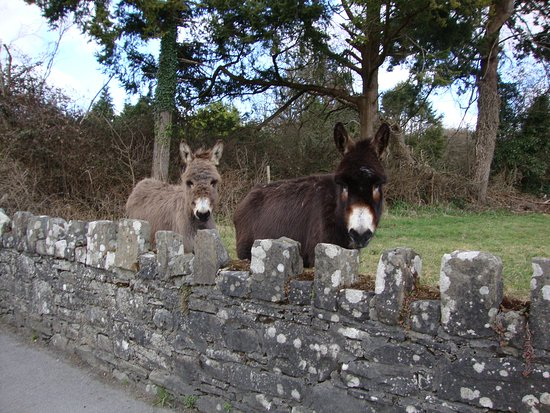 All creatures great & small in Mountshannon!