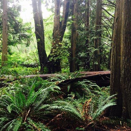 Bilde fra Nanaimo