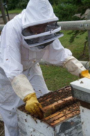 Okotoks, كندا: A worker dressed up to show off bees
