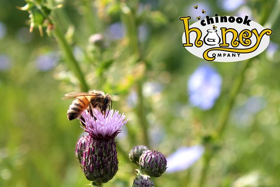 Okotoks, كندا: One of our bees working hard.