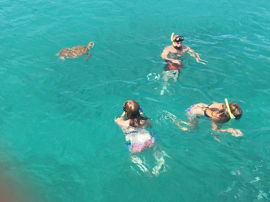 St. James, Barbados: Swimming the the sea turtles.