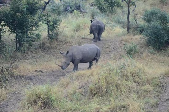 Game drives at Phalaborwa Gate in Kruger National Park: There were opposing each other
