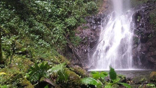 Bajos del Toro, Costa Rica: Catarata de Fatima al final del sendero del mismo nombre