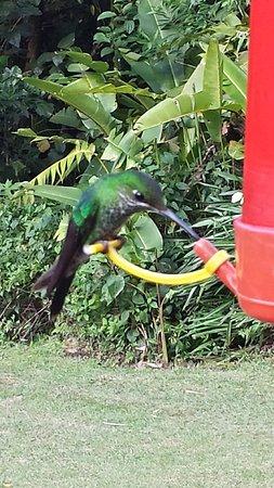 Bajos del Toro, Costa Rica: Comederos para atraer colibríes en los alrededores del restaurant