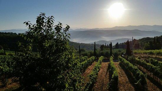 Vagliagli, Italië: 20160727_064949_large.jpg