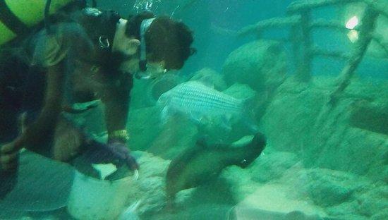 Bang Lamung, Tailandia: Fish feeding