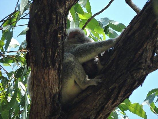 Noosa, Australia: photo5.jpg