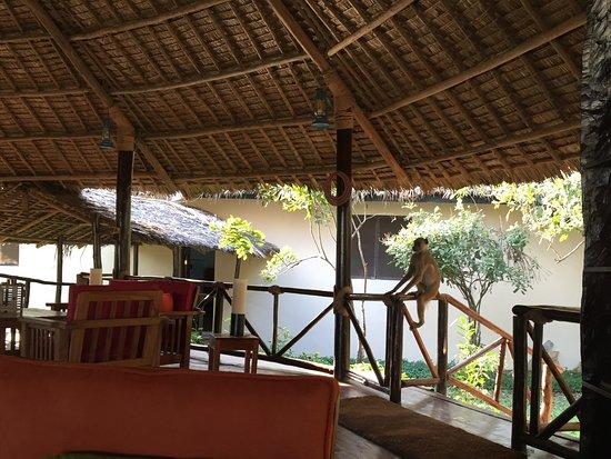 Bilde fra Selous Game Reserve