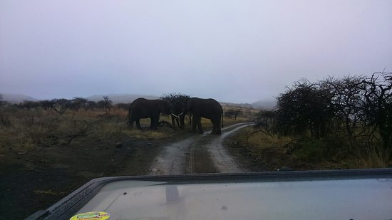 Ladysmith, Sudáfrica: DSC_0129_large.jpg