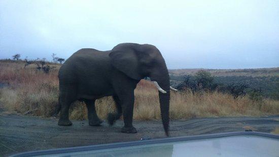Ladysmith, Sudáfrica: DSC_0122_large.jpg