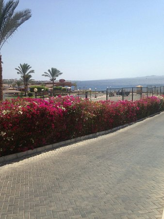 Xperience Sea Breeze Resort: Amazing place great people