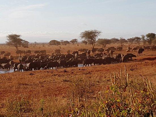 Voi, Kenya: 20160727_075158_large.jpg