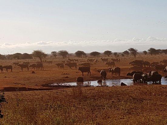 Voi, Kenya: 20160727_075202_large.jpg