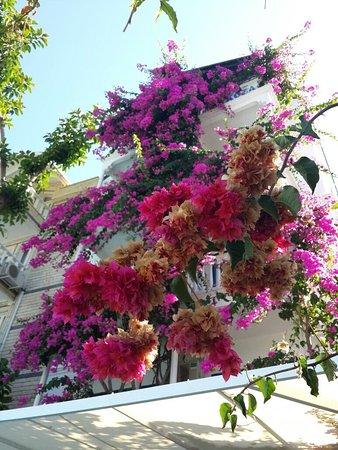 Hotel Koza: photo0.jpg