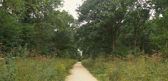Alcester, UK: Oversley Woods