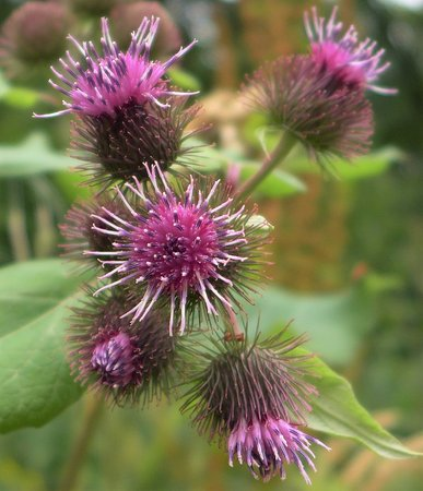 Alcester, UK: Thistle
