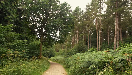 Alcester, UK: Through the woods