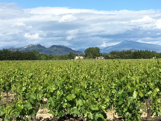 Jonquieres, Fransa: located in the middle of vineyards
