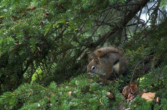Nikiski, AK: Søte små ekorn ved campingplassen