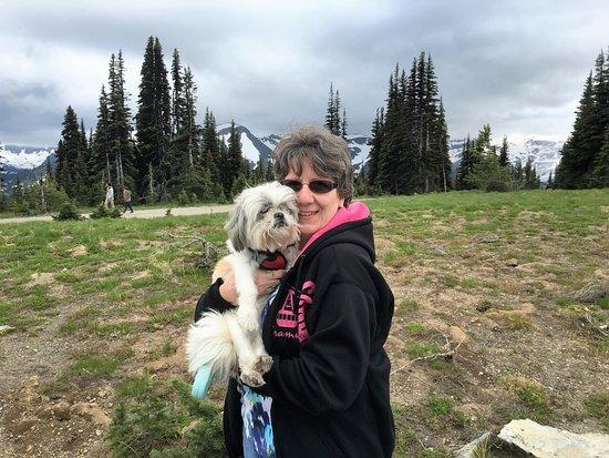 Mount Rainier: Our dog enjoyed the cool day, regardless.