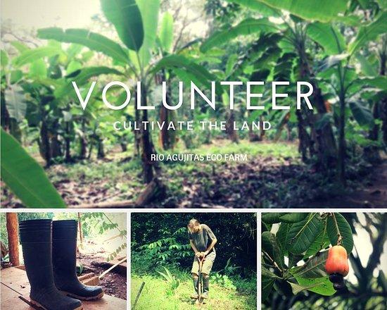Vista Drake Lodge: voluntariado