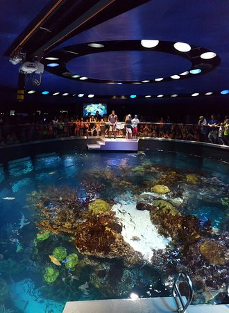 20160727 133149 Picture Of New England Aquarium Boston Tripadvisor