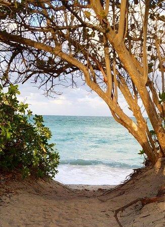 Design Suites Miami Beach: Acceso a la playa casi paradisíaco