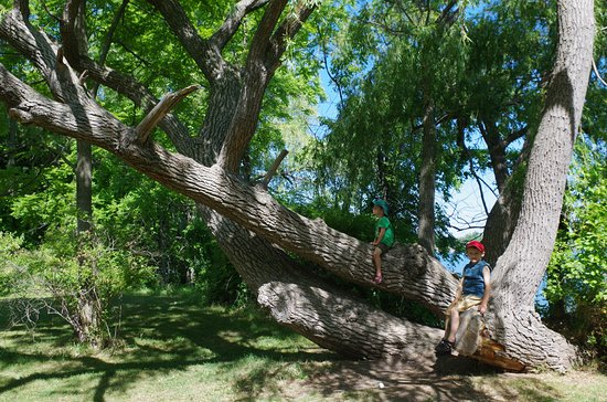 St. Catharines, Kanada: climbing tree