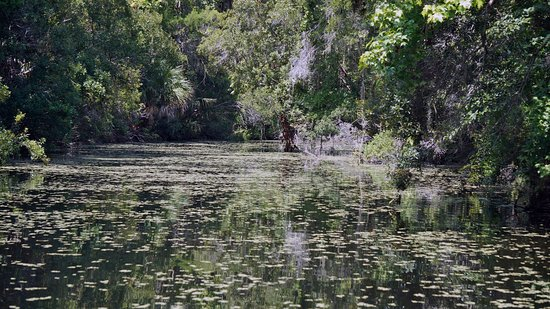 Homosassa Springs, FL: This is a view from the boat. The tour guide is quite knowledgeable about the history of the are