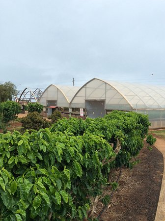 Kalaheo, Havai: Plantation tour path with greenhouses in the background.