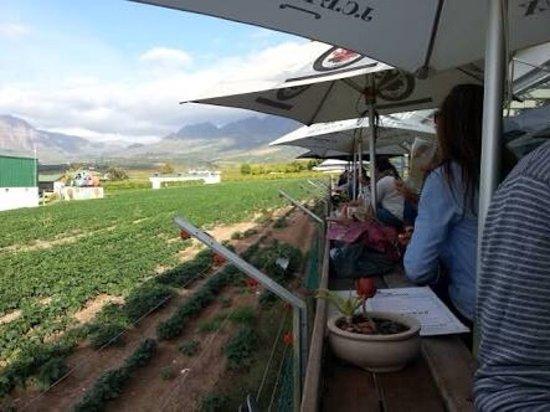 Stellenbosch, Sudáfrica: photo0.jpg